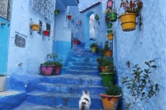 Chefchaouen, Morocco (2016)